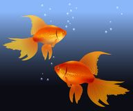 Two gold fishes Stock Photos