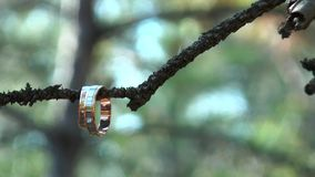 Two gold rings hanging on a branch. Wedding rings hanging on tree stock video footage