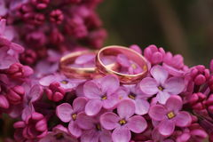 Two gold rings with lilac flowers. Beautiful lilac background with violet flowers and rings and marriage gold stock photo