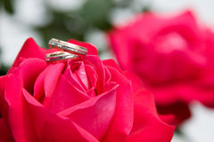 Two gold rings with pink rose Stock Photos