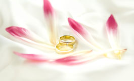 Two gold wedding bands beside a fresh red flower Royalty Free Stock Images