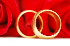 Two gold wedding rings. And red roses Stock Images
