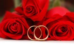 Two gold wedding rings Royalty Free Stock Photo