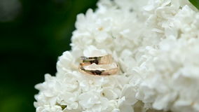 Two gold wedding rings. Lie on a branch of white lilac stock footage