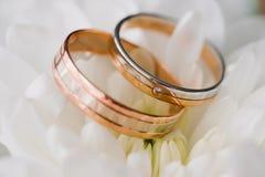 Two gold wedding rings lying on white flower macro Stock Image