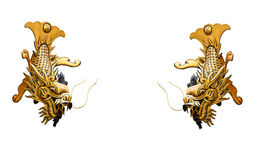 Two Golden Dragon fish isolated on white background. Stock Images