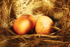 Two golden eggs Stock Images