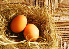 Two golden eggs Stock Photography