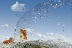 Two Golden fish. Sky and water Royalty Free Stock Photography