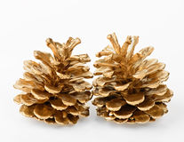 Two golden pine cones Stock Images