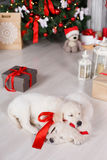 Two golden retriever puppies near christmas tree with gifts. Royalty Free Stock Photos