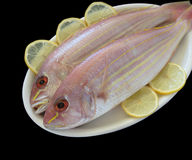 Two golden threadfin fish Royalty Free Stock Photos