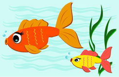 Two Goldfish Swimming Stock Photo