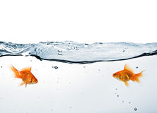 Two goldfish in water Stock Photo