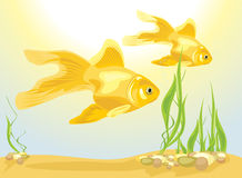 Two goldfishes among algae and pebbles Royalty Free Stock Photos