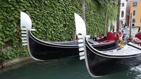 Two gondolas are bobbing on the waves. Closeup view of two gondolas moored by Grand Canal. Gondolas are bobbing on the waves. House covered with green climbing stock footage