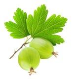 Two gooseberries Stock Image