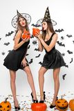 Two gorgeous girls in black dresses, witch hats and high heels hold halloween pumpkins in hands and keep legs on the stock photography