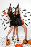 Two gorgeous girls in black dresses, witch hats and high heels hold halloween pumpkins in hands and keep legs on the royalty free stock photos