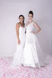 Two Gorgeous Young Brides wearing Bridal Gown Stock Photo