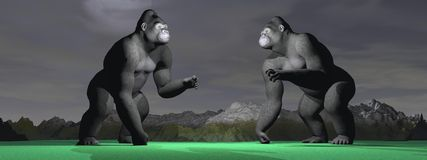 Two gorillas which bagarent Stock Photography