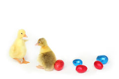 Two goslings with Easter eggs Royalty Free Stock Images