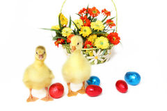 Two goslings with Easter eggs and flowers Stock Photo