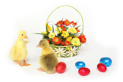 Two goslings with Easter eggs and flowers Stock Photos
