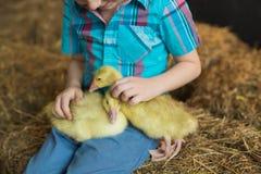 Two goslings sit on a legs little boy in farm Stock Photography