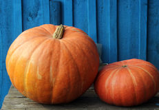 Two gourd close-up on the blue wooden background after harvest Stock Images