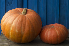 Two gourd close-up on wooden background after harvest. Stock Photos