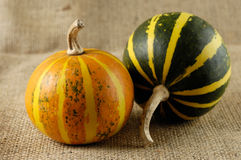Two Gourds Still Life Royalty Free Stock Photos