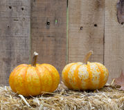 Two Gourds Royalty Free Stock Photos