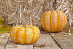Two Gourds Stock Photos