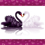 Two graceful swans in love. Black-and-white heart Stock Photo