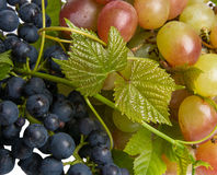 two grade grape Royalty Free Stock Images