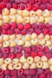 Two grades of a raspberry - red and yellow Royalty Free Stock Photos