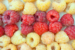 Two grades of a raspberry - red and yellow Stock Photo