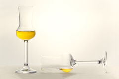 Two Grappa glasses Stock Photography
