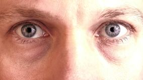 Two gray blue eyes staring into the camera.  Royalty Free Stock Image
