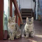 Two gray cat. Sitting on the doorstep Royalty Free Stock Images