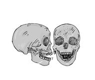 Two gray colored skulls a profile and facing human bones Royalty Free Stock Photos