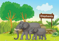 The two gray elephants near a wooden signage Stock Images