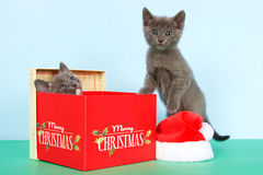 Two Gray kittens christmas box stock photos