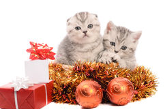 Two gray kittens with christmas decorations Stock Images