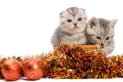 Two gray kitties with christmas decorations Stock Photography