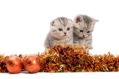 Two gray kitties with christmas decorations Royalty Free Stock Photo