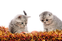 Two gray kitties playing with tinsel Royalty Free Stock Images