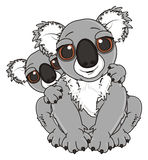 Two gray koalas Royalty Free Stock Photo