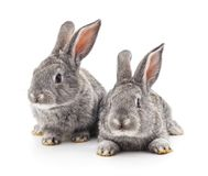 Two gray rabbits. Two gray rabbits on a white background Royalty Free Stock Images